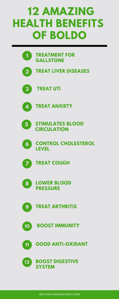Boldo Health Benefits